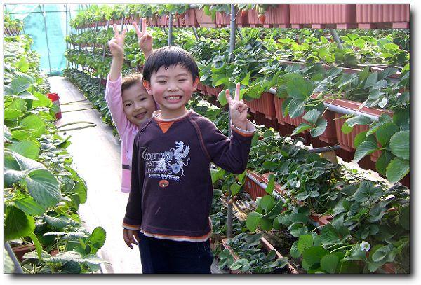 110227內湖草莓季 (23).jpg
