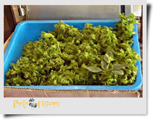馬槽野菜 (4).jpg
