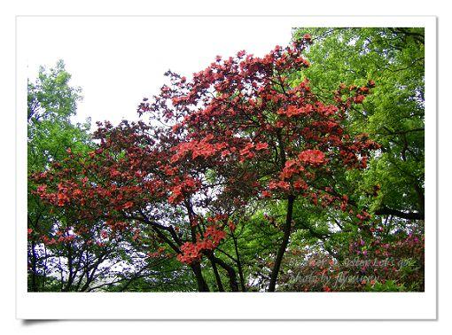 陽明山公園2 (1).jpg