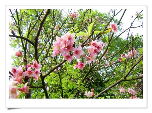 陽明山公園2 (4).jpg