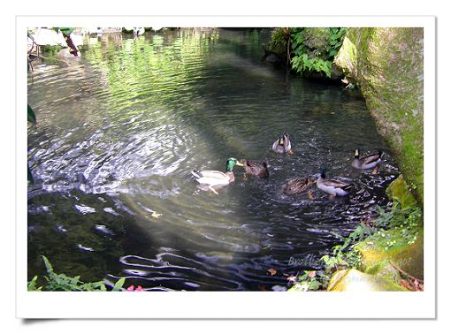 陽明山公園 (2).jpg