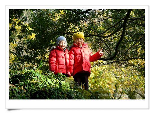 陽明山公園 (4).jpg