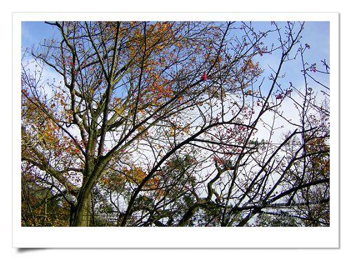 陽明山公園 (6).jpg