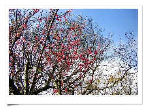 陽明山公園 (9).jpg