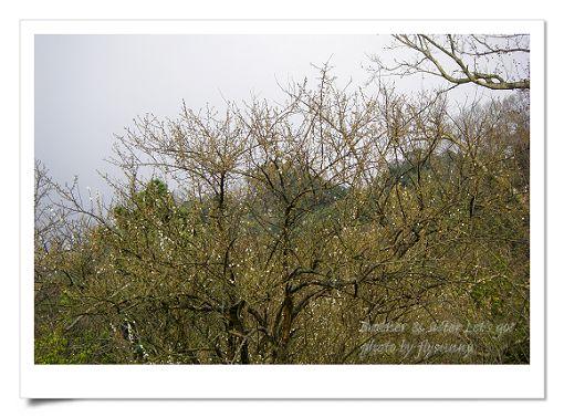 陽明山公園 (12).jpg
