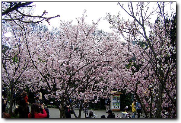 2011陽明山花季 (15).jpg