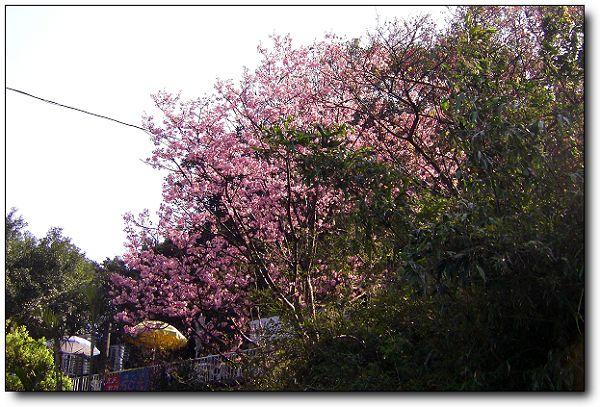 110227內湖草莓季 (2).jpg