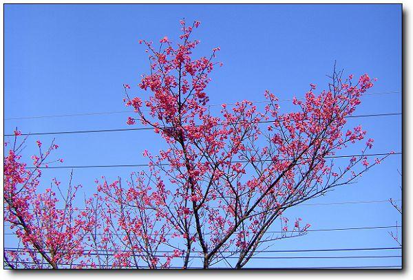 110227內湖草莓季 (10).jpg