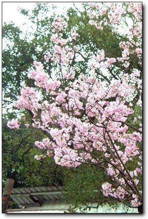 110227內湖草莓季 (37).jpg