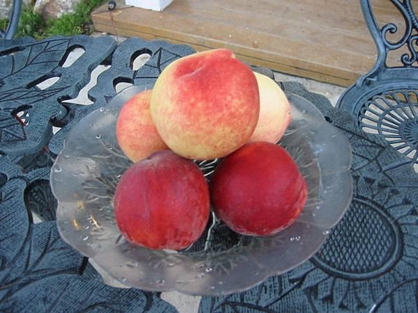 肥碩多汁的水蜜桃!