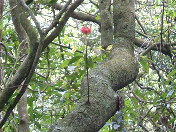 樹上一枝花