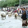 藥王山的放生羊.JPG