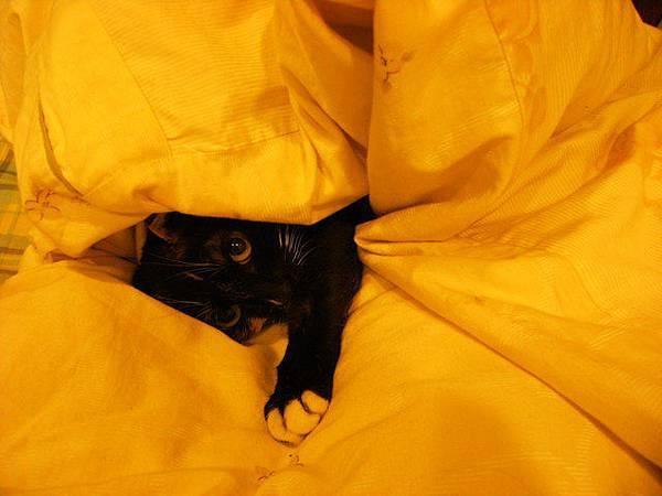躲在被子裡