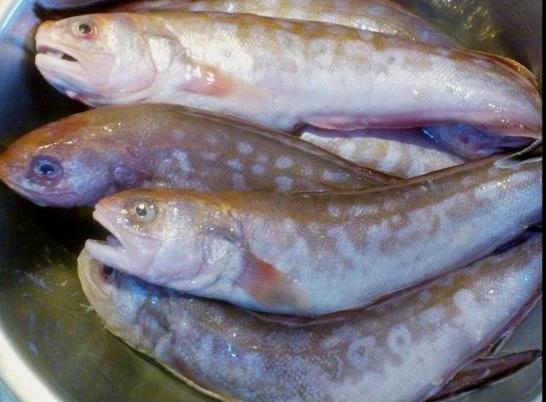 鼬魚-烤前