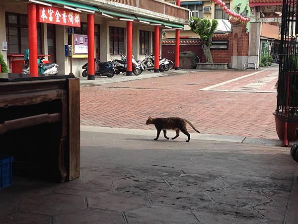 新祖宮的貓