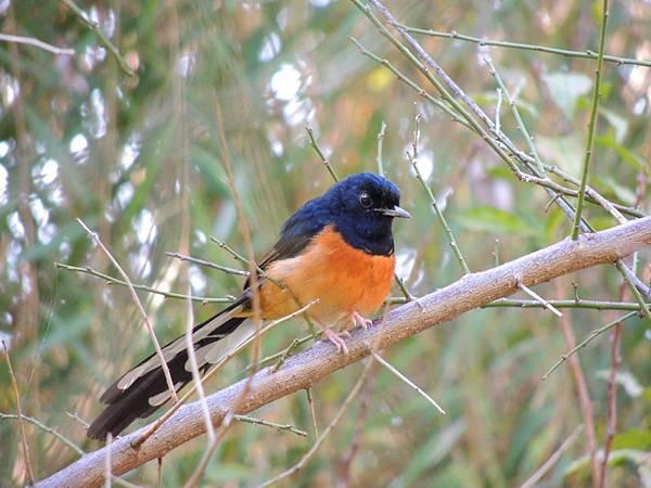 台北植物園(可愛的鳥兒)