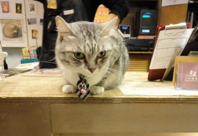 茉莉二手書店店貓