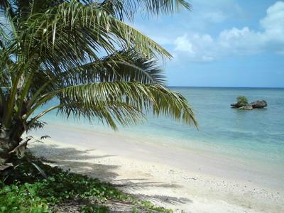 藍天沙灘椰子樹