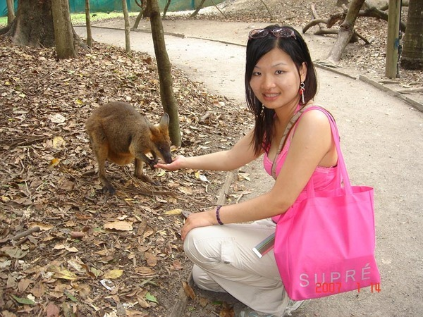 feeding kangoroo