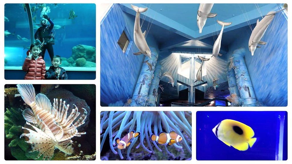 0水族館0.jpg