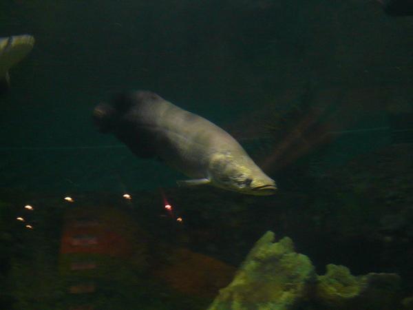 象魚.JPG