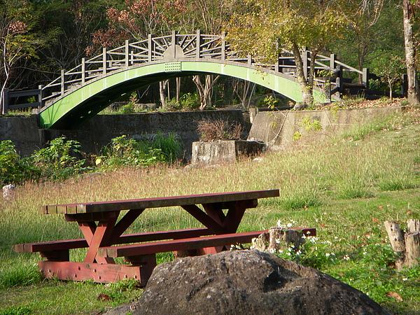 陽光下的曲橋、楓香