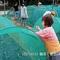 102/10/13 種菜、蕃茄(阿蓮田園)