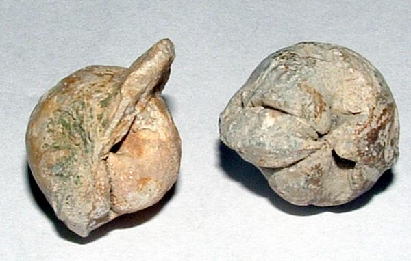 化石1 008.jpg