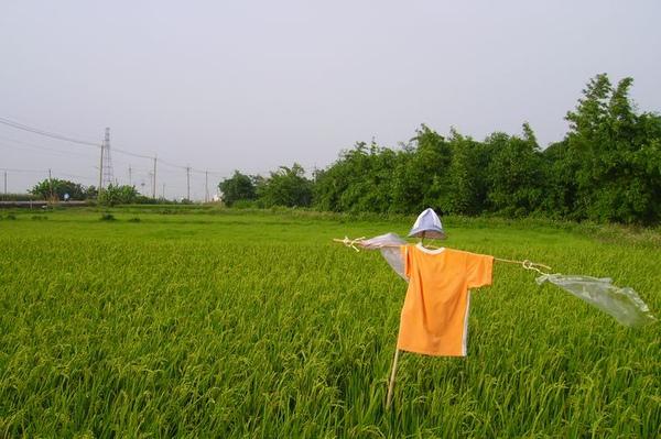 台灣稻草人-3.bmp