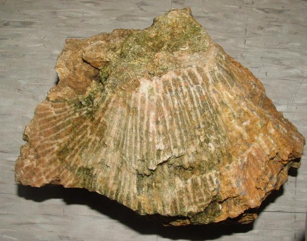 化石3 023.jpg