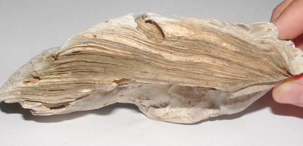 化石1 029.jpg