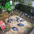 Okinawa_Day4_IMG_1097.jpg