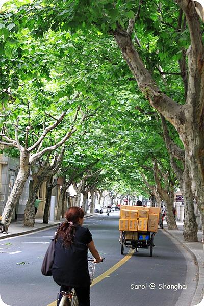 Blog 2010上海-思南路 04.JPG