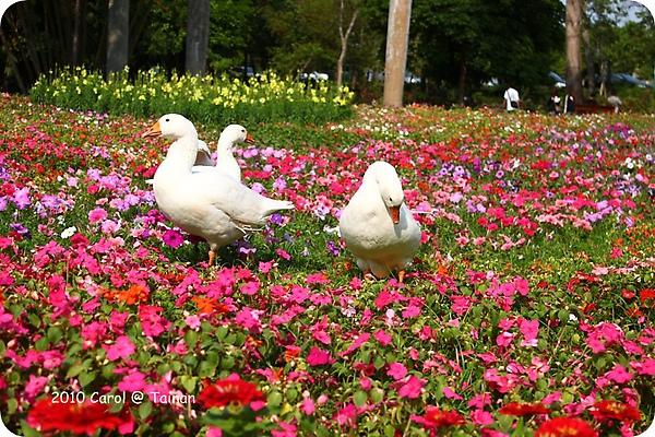 2010台南公園賞花季 10.JPG