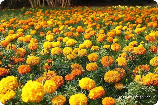 2010台南公園賞花季 11.JPG
