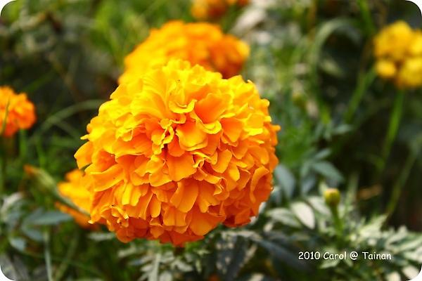 2010台南公園賞花季 12.JPG