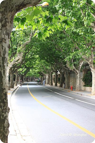Blog 2010上海-思南路 17.JPG