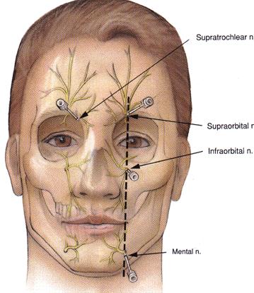 facial-sensory-nerve-branches1.gif