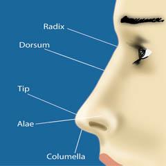 nose_parts
