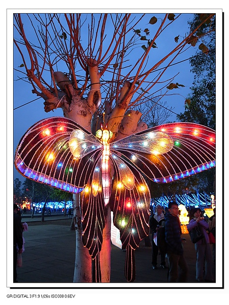 4.樹上蝴蝶.JPG