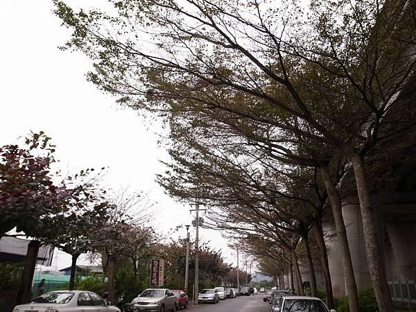 8.泰安新站的路樹