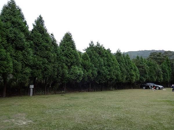 4.天然大樹是我們的靠山