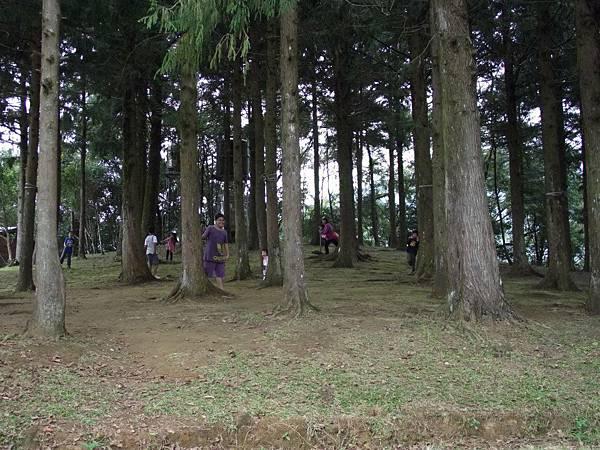 7.森林裡的小精靈們出現了