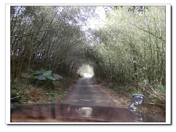 4.竹林夾道