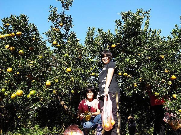 2-2.大家都收穫滿袋橘啊!