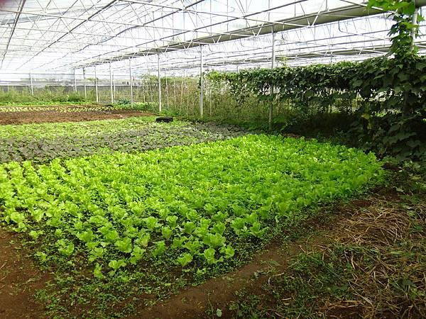 9.布拉姆的有機菜圃