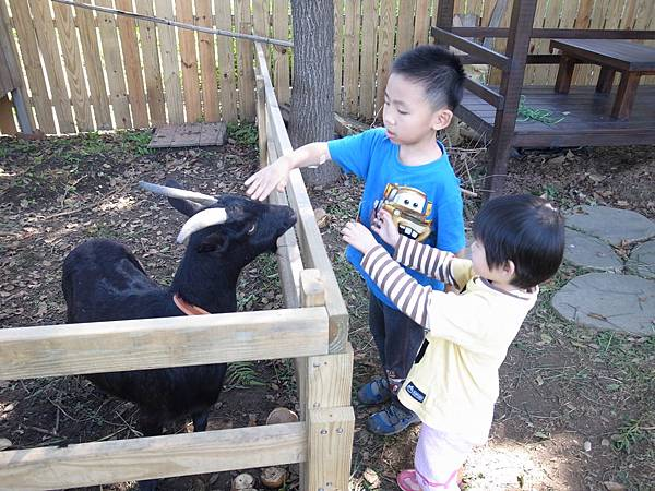 2.餵食帥氣的黑羊