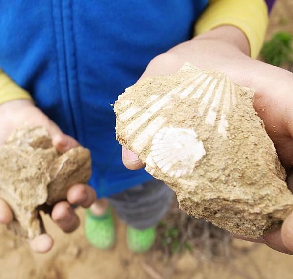 20.土裡的化石貝殼