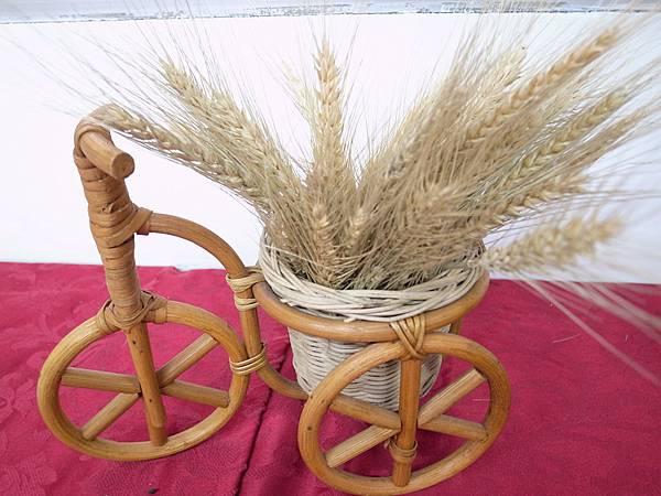 5.小麥成熟時