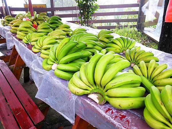29.湖畔營地之香蕉